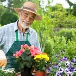Требуется садовник с опытом работы.1-3 раза в неделю.